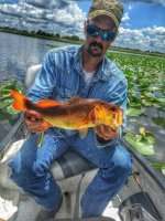 Jeff Puckett with a Gold Bass From Titusville's Fox Lake (photo courtesy of FWC)